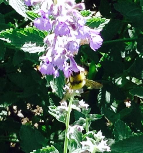gardenbee