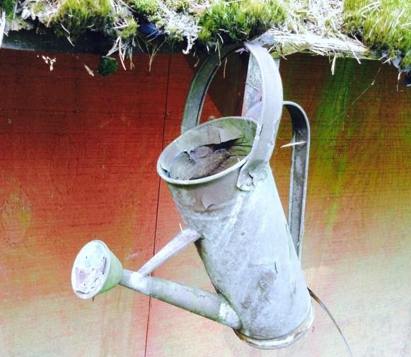 gardenwater